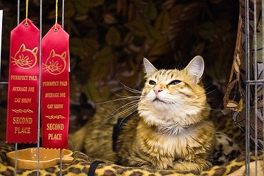 Maybe your sweet kitty can take home a few ribbons in the household category.