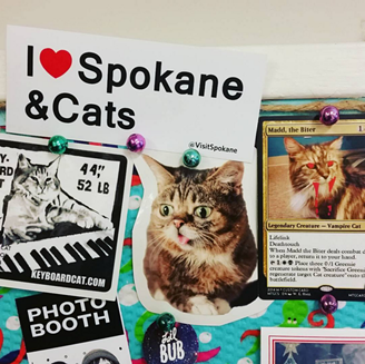 Cat lovers at the Inlander are already displaying their contest stickers with pride. - JESSIE SPACCIA