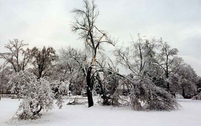 A tree splintered by Ice Storm's wrath, in Spokane's Corbin Park. - DAN HAGERMAN