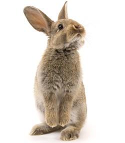 rabbit-13e812b27f261324c39.jpg