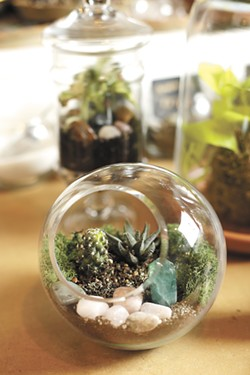An open terrarium. - YOUNG KWAK