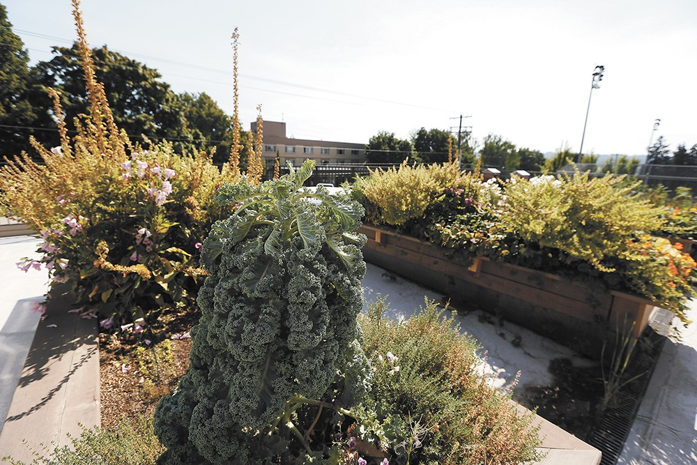 Some ingredients, like this kale served at Gonzaga are even grown on campus. - YOUNG KWAK