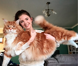 Omar poses with his cat mom Stephanie Hirst. - INSTAGRAM: @OMAR_MAINECOON