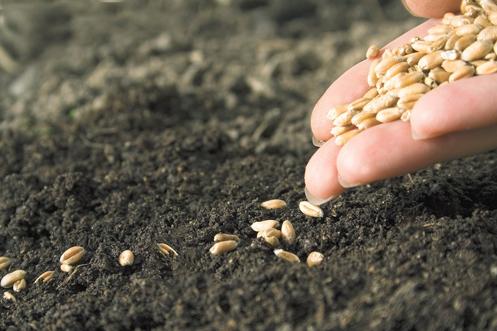 'Tis the season to start thinking about your seeds