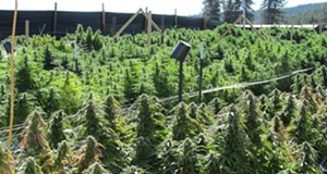 Gift Guide, outdoor pot farm ban, pizzagate guy talks and other headlines
