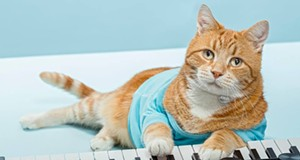 CAT FRIDAY: Spokane's Keyboard Cat, Bento, has crossed the Rainbow Bridge