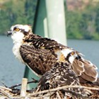 Birds of Prey Cruise