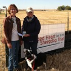 Shaded Heart Sheepdog Trial