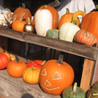 Colville Corn Maze & Pumpkin Patch