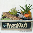 Plant Nite: Thanksgiving Succulent Planter