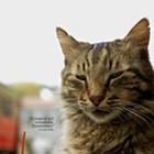 International Cat Day: Kedi
