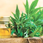 Prospect for CBD-derived products has some salivating, but debate over medicinal uses continues