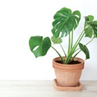 Foliage offers an easy way to freshen up decor