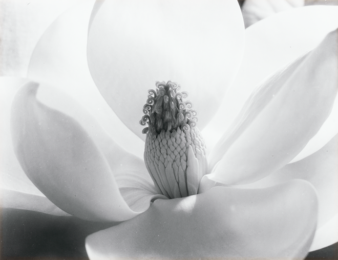 cunningham_magnolia_68_12_1.png