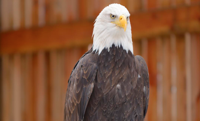 eagle_aviary.png