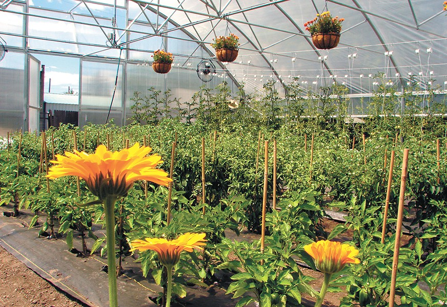 The new garden brings fresh produce to in-house products. - CARRIE SCOZZARO PHOTO