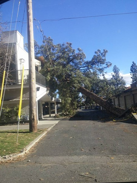 A tree that fell on a condo complex between 3rd and 4th in Browne's Addition across the street from Coeur d'Alene Park. - PHOTO COURTESY OF FELICIA DIAMOND