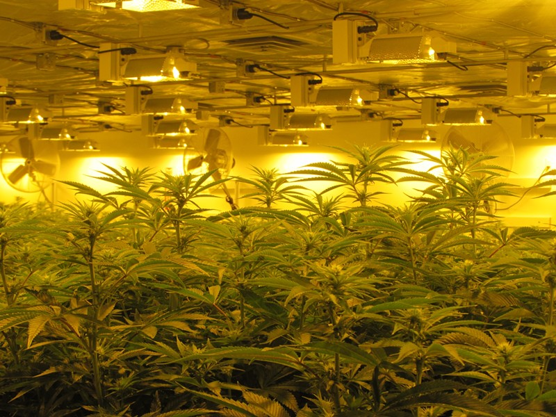 A grow room at Grow Op Farms in Spokane Valley - WILSON CRISCIONE