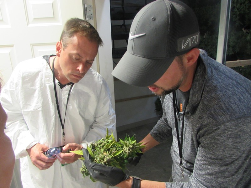 Councilman Caleb Collier gets a crash course in pot production by Grow Op Farms owner Rob McKinley - WILSON CRISCIONE