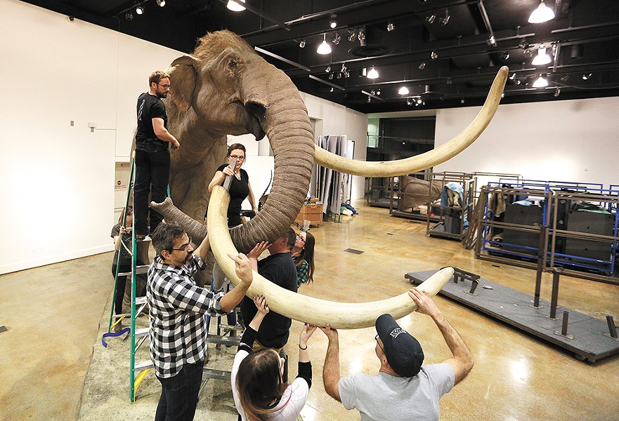Museum staff assemble a life-size model of the Columbian mammoth. - YOUNG KWAK