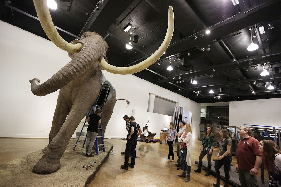 Museum staff assemble a life-size mammoth - YOUNG KWAK