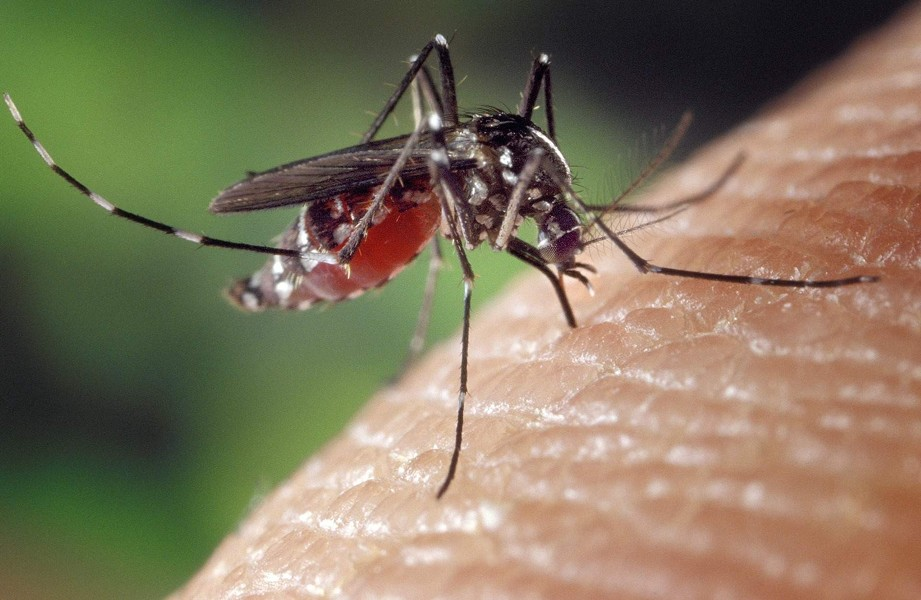 Two cases of mosquito-spead West Nile virus have been reported in Spokane County.