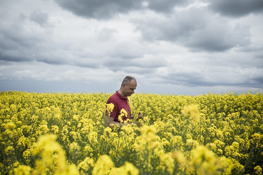 "Arnaud Rousseau, a sixth-generation farmer, walks among his rapeseed fields in Trocy-en-Multien, France, May 9, 2016. Rapeseed yields in Europe, where genetically modified crops are banned, remain higher than in Canada, where GMOs have long been in use. ""My grandfather had horses and cattle for cropping,"" Rousseau said. ""I've got tractors with motors."" - ED ALCOCK/THE NEW YORK TIMES"