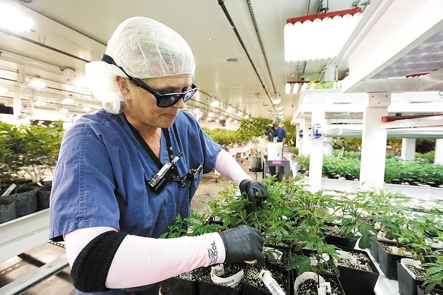 GrowOp Farms' growing facility is a bit like a hospital. A really chill hospital. - YOUNG KWAK