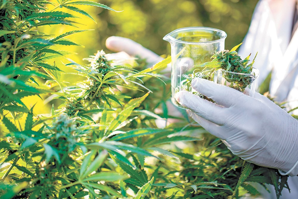 The DEA triples the amount of cannabis available for research