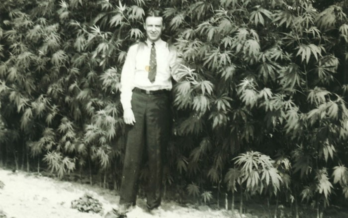 Ye olde hemp farmer in front of a marijuana crop of yesteryear. - DEAMUSEUM.ORG