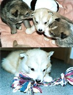 Kaisa as a puppy (center)