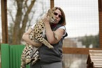 Owner Anya Spielberg holds 1-year-old serval Boomer in his enclosure at Savannah Exotics in Oakesdale, Wash., Wednesday, March 21, 2018.