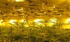 Touring an indoor weed farm with Spokane Valley City Council