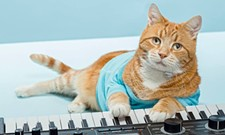 CAT FRIDAY: Spokane's Keyboard Cat, Bento, has crossed the Rainbow Bridge