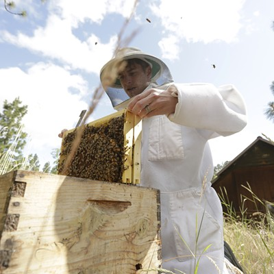 HoneyLove Urban Beekeepers