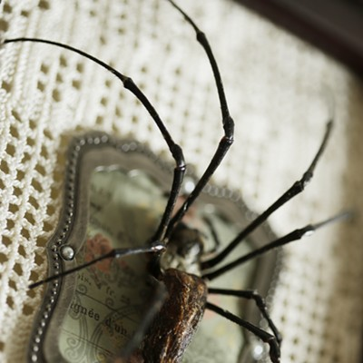 The Taxidermied Spiders of CarLy Haney