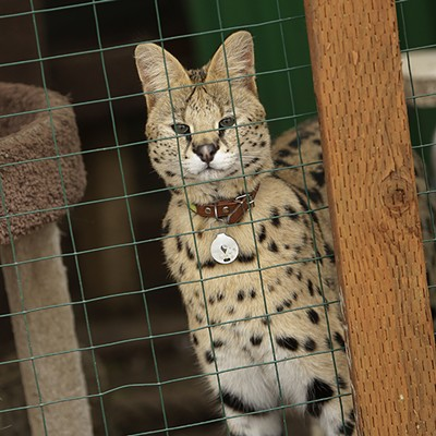 Savannah Exotics in Oakesdale, Wash.