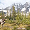 Wildlife biologists may move Selkirk caribou herd to Canada to save them