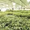 Pot advocates hope the Legislature makes working in the industry more fair