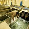 Spokane Tribe Fish Hatchery