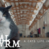 CAT FRIDAY: Mini-docu highlights SpokAnimal's Farm Livin' barn cat program