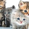 SHS Kitten Shower