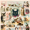 CAT FRIDAY: Gifts for cats and their people