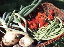 358370d9_local_harvest_sustainable_foods_picture.png