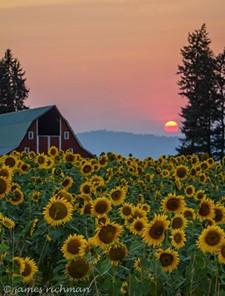 a32d4d95_red_barn_sunflower.jpg