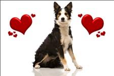 8b5b56e1_puppy_love_image.jpg