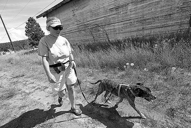 Volunteer Mary Anne Sullivan walks 10-year-old pit bull mix Dozer at the Spokane Humane Society. - YOUNG KWAK