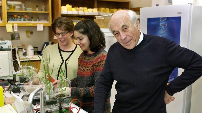 Washington State University ag researcher Diter von Wettstein thinks gluten-free wheat is just a decade down the road. - WSU PHOTO