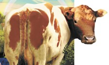 We Can Turn Cow Pies Into Plastic Wrap
