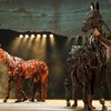 Why we think you should see War Horse